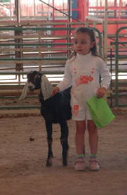lana with her nubian dairy goat