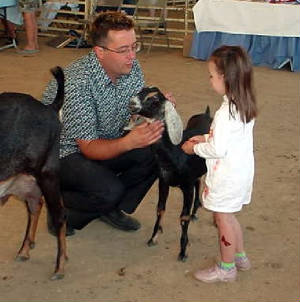 pee wee showmanship for nubian dairy goats